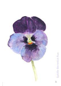 Aquarell eines violetten Stiefmütterchens