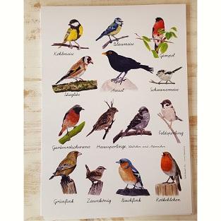 Vogelposter mit heimischen Singvögeln in DIN A3